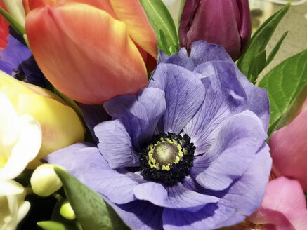 Tulips and anemones - CSTF000719