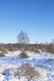 Belgium, High Fens, winter landscape - HLF000833