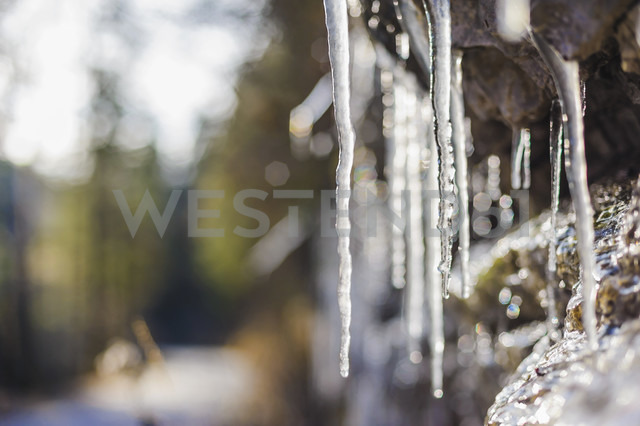 Icicles in sunlight - MJF001457