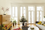 Modern loft living room with potted blue spruce Christmas tree - MFF001348
