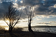 Germany, Baden-Wuerttemberg, Constance district, Tree silhouettes at lakeshore of Reichenau Island - ELF001438