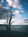 Germany, Lake Constance, Reichenau, tree at lakeshore - ELF001439