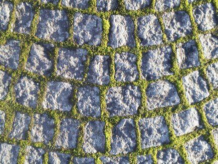 Cobblestone pavement with moss - ELF001462