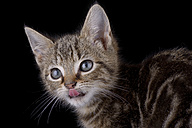Tabby cat in front of black background - MJOF000923