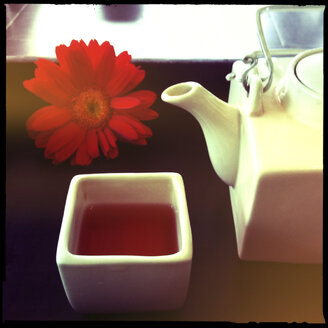 tea with flower at spa treatment, da nang, vietnam - LULF000188