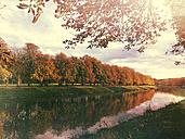 Germany, Decksteiner Weiher, chestnut trees in autumn - GWF003600