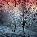 Germany, Wuppertal, landscape with trees in winter - DWI000380