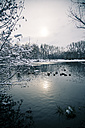 Germany, Bavaria, Ergolding, Pond with birds and swan in winter - SAR001272