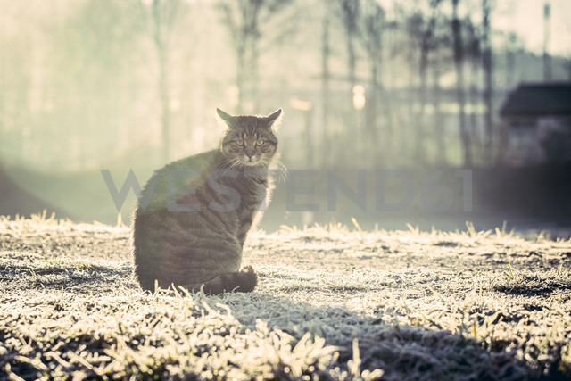 Germany, domestic cat in winter - SARF001267