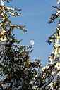 Germany, Baden-Wuerttemberg, Black Forest, Trees and moon - JUNF000177
