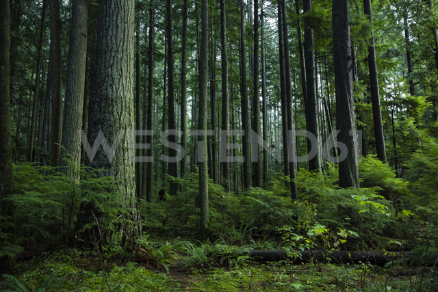 Canada, Vancouver, forest - NGF000166 - Nadine Ginzel/Westend61