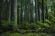 Canada, Vancouver, forest - NGF000166