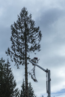 Canada, North Vancouver, Woodsman cutting trees - NG000167