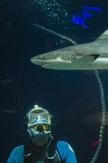 Canada, Vancouver Aquarium, Black-tip reef shark and watching scuba diver - NGF000175