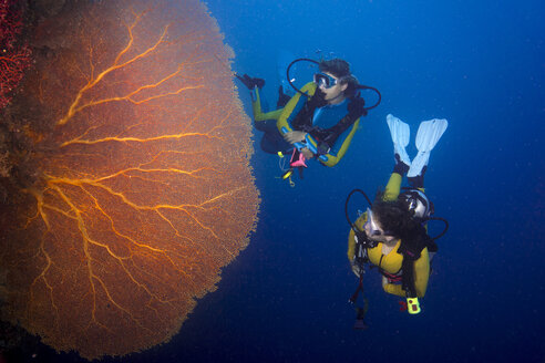 Pacific Ocean, Palau, scuba divers in coral reef with Giant Fan Coral - JWAF000211