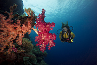 Pacific Ocean, Palau, scuba diver in coral reef with tree coral - JWAF000213