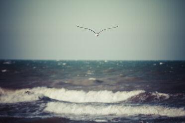 Germany, Baltic Sea, Dahme, seagull above the sea - KRPF001282