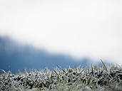 Germany, Black Forest, frozen grass in the morning in winter - KRPF001183