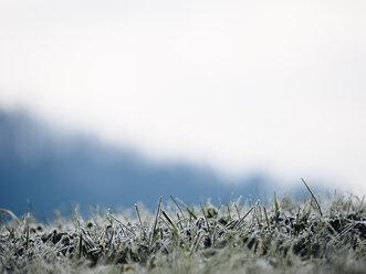 Germany, Black Forest, frozen grass in the morning in winter - KRPF001183