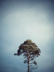 Germany, single tree in front of sky - KRPF001185