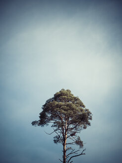 Germany, single tree in front of sky - KRPF001185