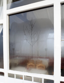 Austria, Empty restaurant, bare tree reflecting in window - WWF003418