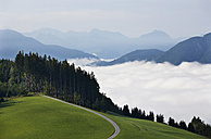 Austria, Upper Austria, Salzkammergut, Mondsee, forest road and clouds - WWF003447