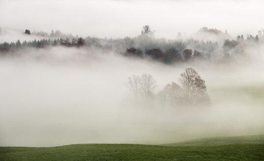 Austria, Mondsee, autumn forest in morning mist - WWF003452