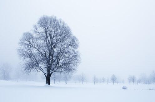 Austria, Mondsee, snow-covered winter landscape - WWF003588