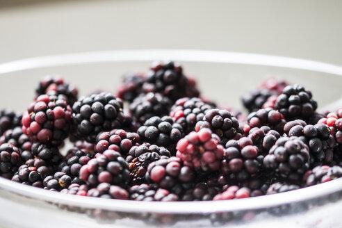 Bowl of blackberries - CHPF000004