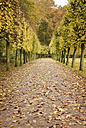 Germany, Duesseldorf, autumnal alley in a park - GUFF000089