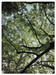 Germany, Tree top from below - KRPF001242