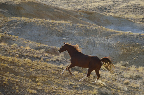 USA, Wyoming, wild horse galloping in badlands - RUEF001475