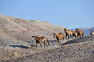 USA, Wyoming, six wild horses running in badlands - RUEF001478