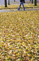 Autumn leaves covering meadow in a park - WW003611