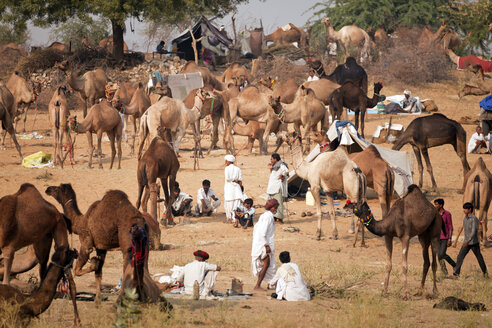 India, Rajasthan, Pushkar, camel and livestock fair - PC000060