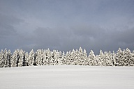 Germany, Baden-Wuerttemberg, Constance district, snow-covered firs - ELF001478