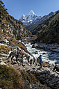 Nepal, Khumbu, Everest region, Pangboche, Horse and on the Everest Trail with Ama Dablam - ALR000008