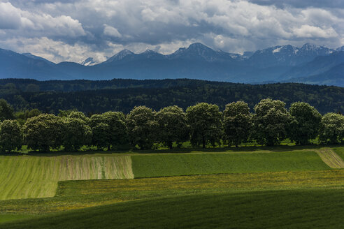 Germany, Icking, view to the Alps with row of maple trees and fields in the foreground - TCF004544