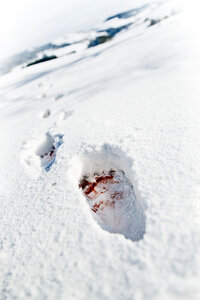 Blood-stained footprints in snow - MID000069
