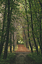 Bulgaria, Sofia, West Park, autumnal path in the park - BZF000036