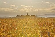 Austria, Burgenland, Oberpullendorf District, Lackendorf, vineyard and church in autumn - SIEF006469