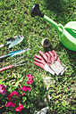 Gardening tools on a meadow - DEGF000253