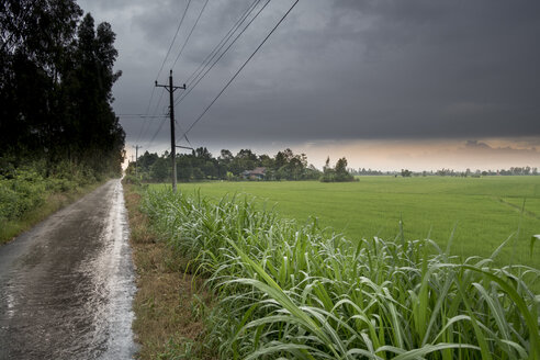 Vietnam, Can Tho, Rice fields in rainy conditions - JWAF000245