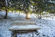 Germany, Bavaria, Landshut, Hofgarten in winter - SARF001343