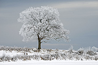 Germany, Schleswig-Holstein, snow-covered tree - HACF000231