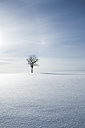 Germany, Baden-Wurttemberg, Swabian Mountains, Tree in snow covered landscape - LVF002830