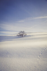 Germany, Baden-Wurttemberg, Swabian Mountains, Tree in snow covered landscape - LVF002831