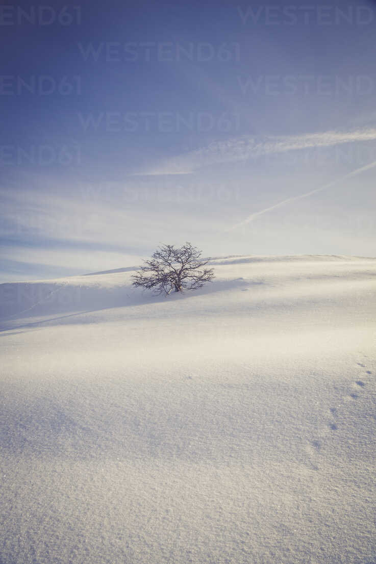 Germany, Baden-Wurttemberg, Swabian Mountains, Tree in snow covered landscape - LVF002831 - Larissa Veronesi/Westend61