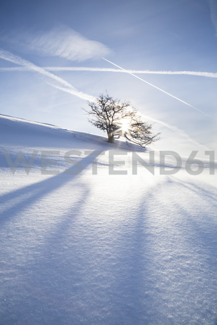 Germany, Baden-Wurttemberg, Swabian Mountains, Tree in snow covered landscape - LVF002842
